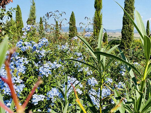 Camera Matrimoniale Deluxe vista Piscina - Villa a Castiglione della Pescaia (7)