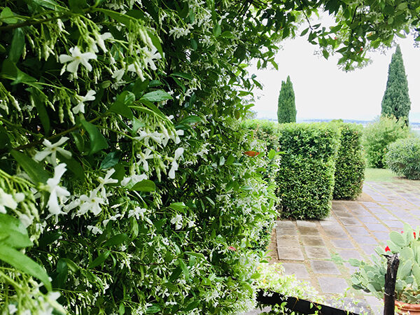 camera matrimoniale vista giardino villa a castiglione della pescaia (32)